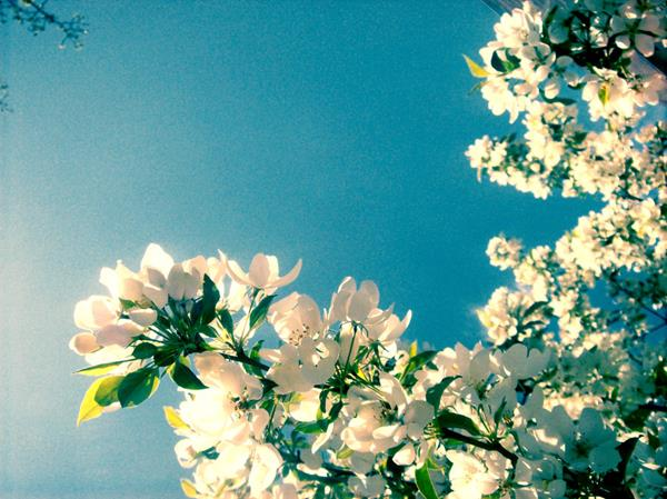 Kendinizi Baharın Kollarına Bırakın