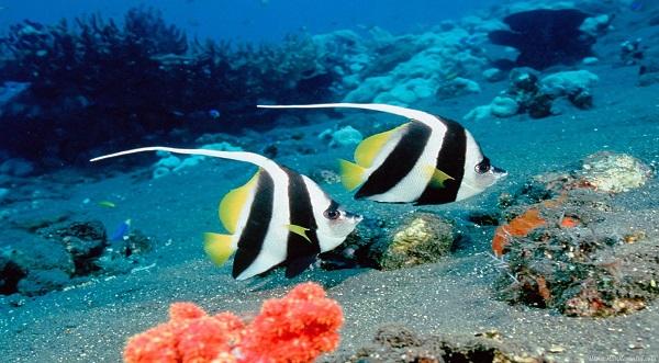 okyanus tabanı