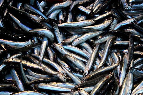 Çiğ Balık